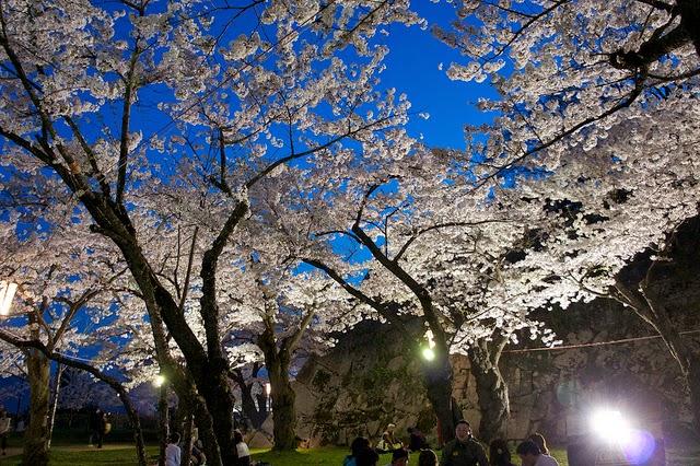 新感覚無音フェス「エレクトリック夜桜サイレントフェス」開催!
